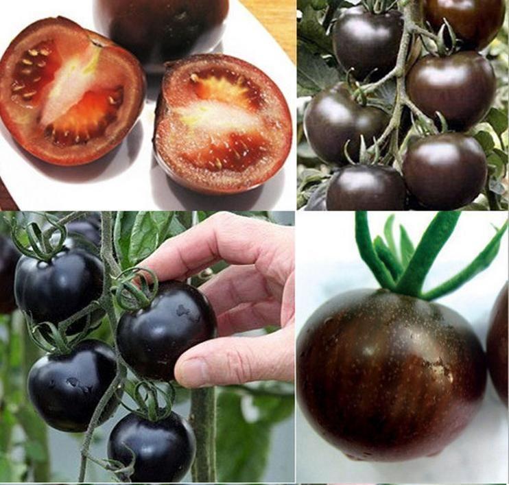 Pin By Grow Plants On Tomato Plant Cherry Seeds Tomato 400 x 300