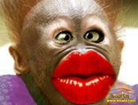 Sending Ya A Biggggggg Smoochie P Monkeys Funny Funny Monkey