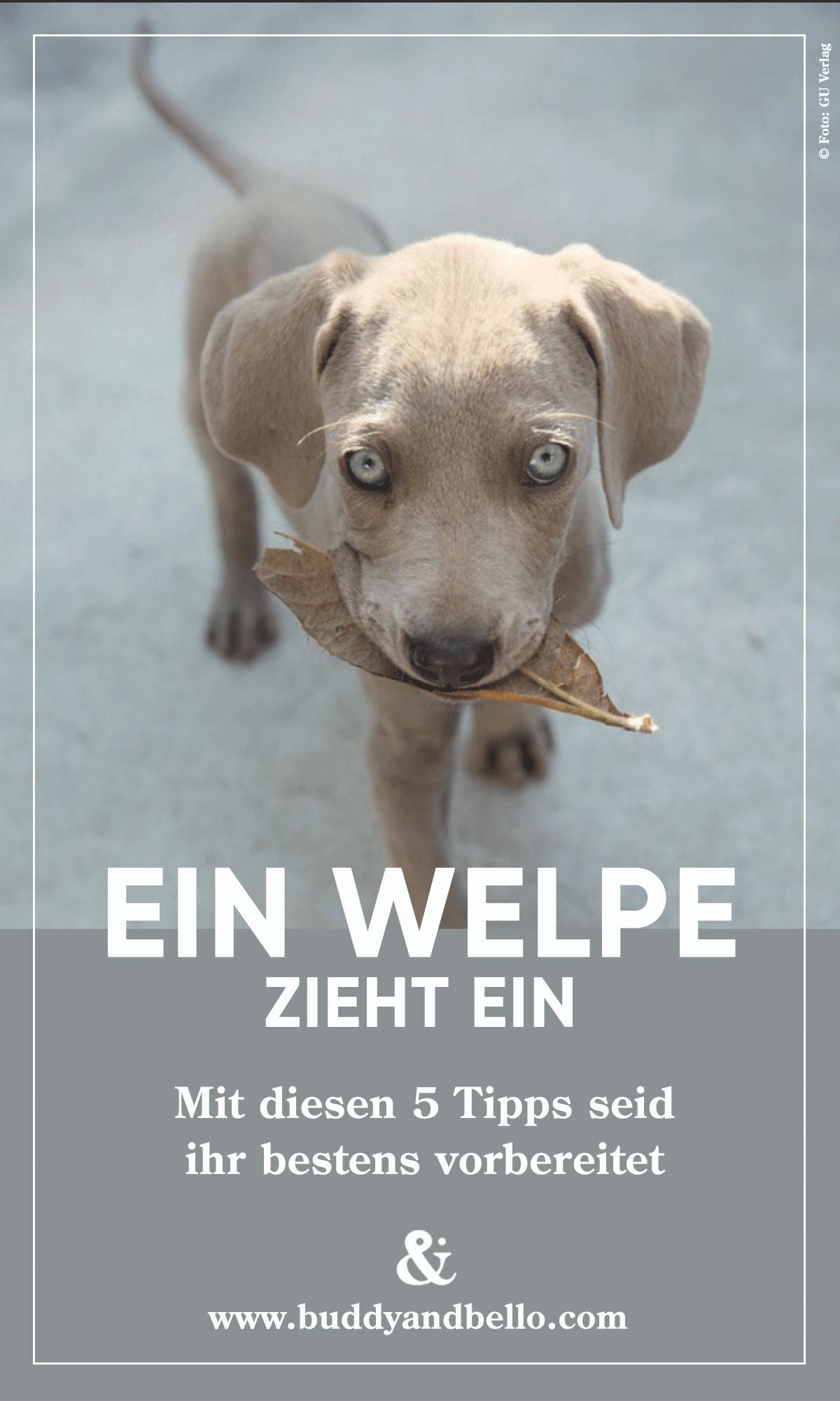 Kleine Welpen Grosse Fragen Welpen Kleine Welpen Babyhunde