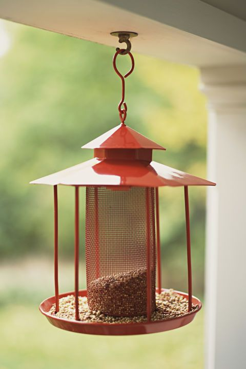 13 Things That Attract Bad Bugs To Your House And Yard Bird Seed Bird Can Dogs Eat