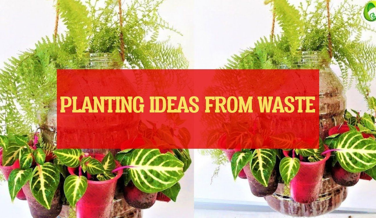 planting ideas from waste  ideen aus abfall pflanzen planting ideas from waste  planting ideas Unique  planting ideas Rose  planting ideas Sunflower