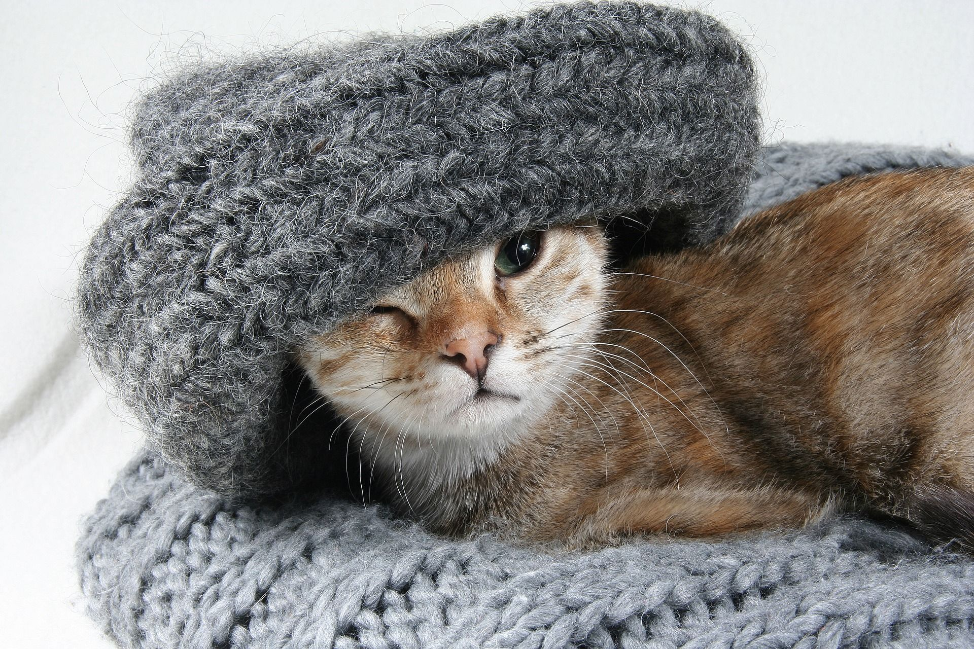 Reasons For Hair Loss In Cats Cats Health In 2020 Cat Proofing Cats Cute Cat Breeds
