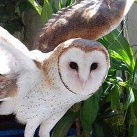 Quiz Missão Bicho: descubra se você sabe tudo sobre as corujas