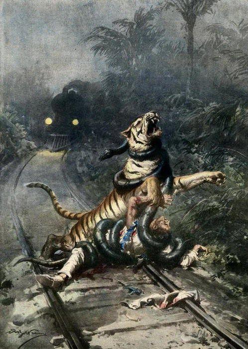 train tracks man tiger jungle anaconda strangling strangle