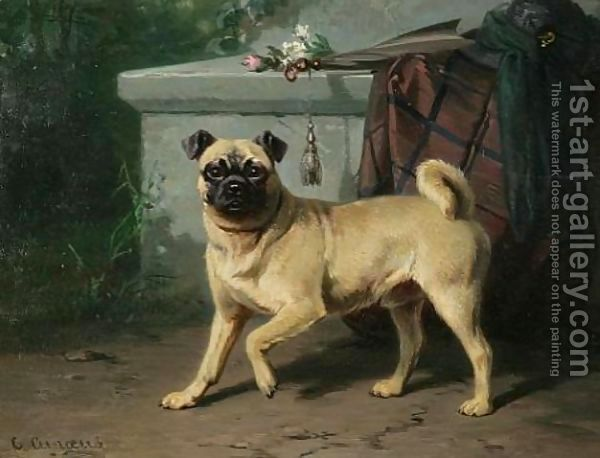 Pug Pugs Dogs Pug Pictures