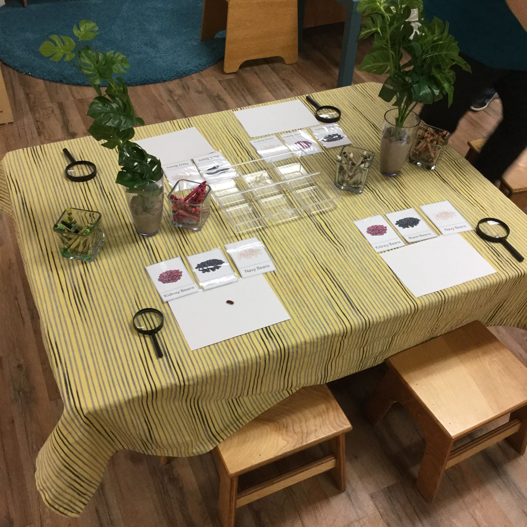 Scientific Exploration With Images Play Based Learning