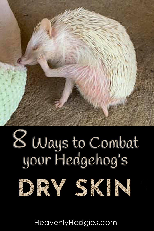 Hedgehog Dry Skin Solutions Hedgehog Pet Dry Skin Solution Hedgehogs Pet Care