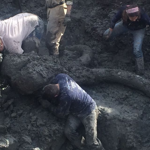 Only five or fewer woolly mammoths have been uncovered so extensively in Michigan