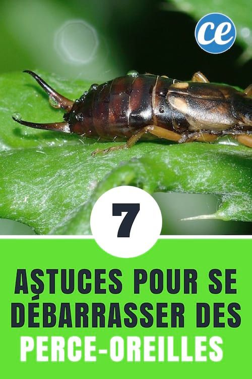 Epingle Sur Tips And Tricks
