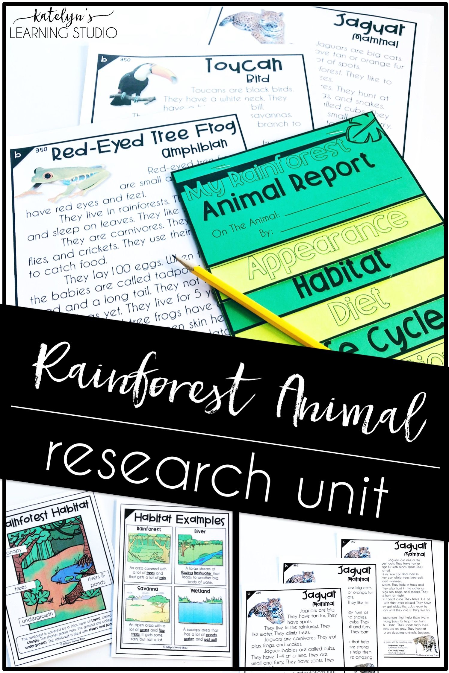 Rainforest Animal Research
