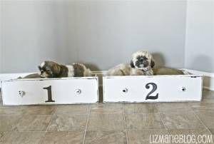 13 annorlunda hundbäddar