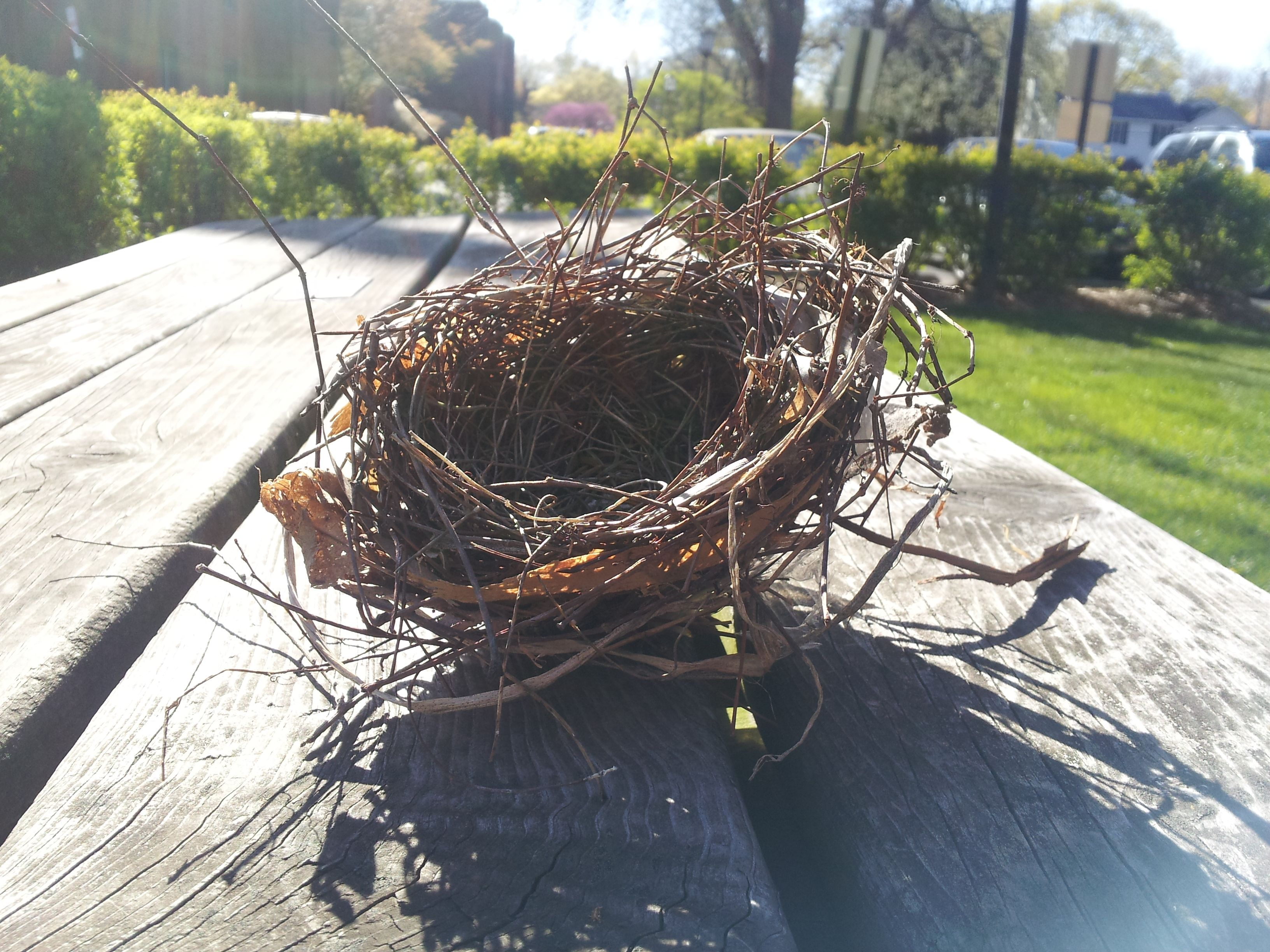 I found a birds nest that fell from a tree! So pretty. No broken eggs, don't worry.