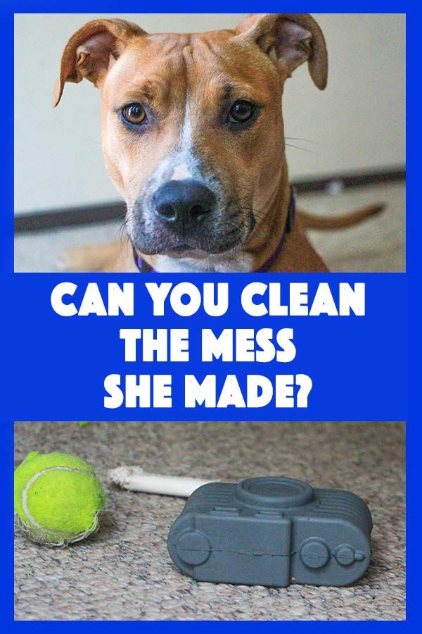 Pet Stains And Carpet Cleaning Tips With Spot Shot Carpet Cleaning Hacks Pet Stains How To Clean Carpet