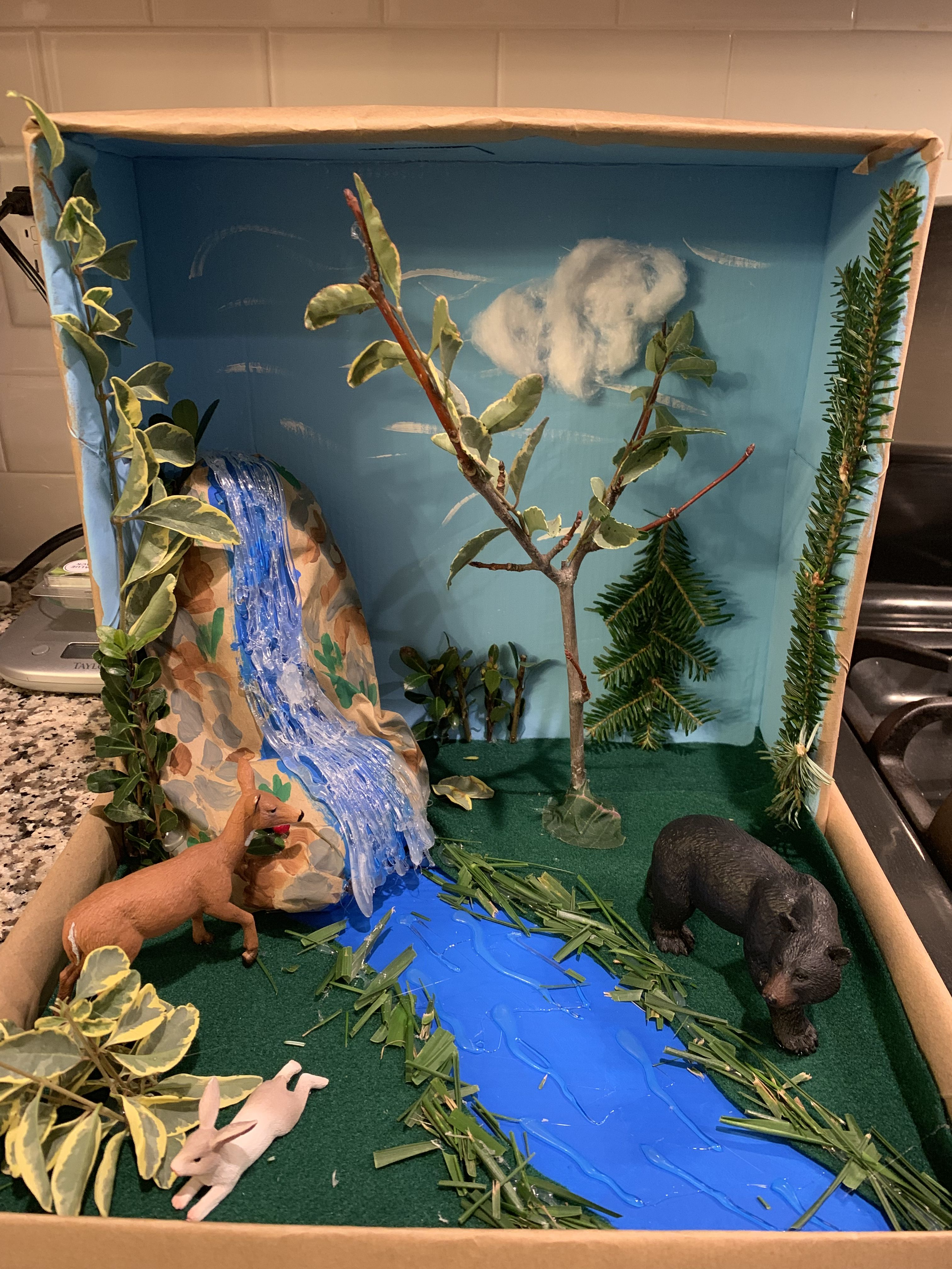 My Son S Temperature Deciduous Forest Biome With Images