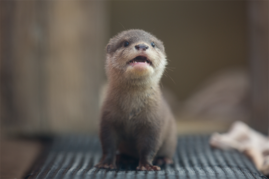 Maggie loves otters