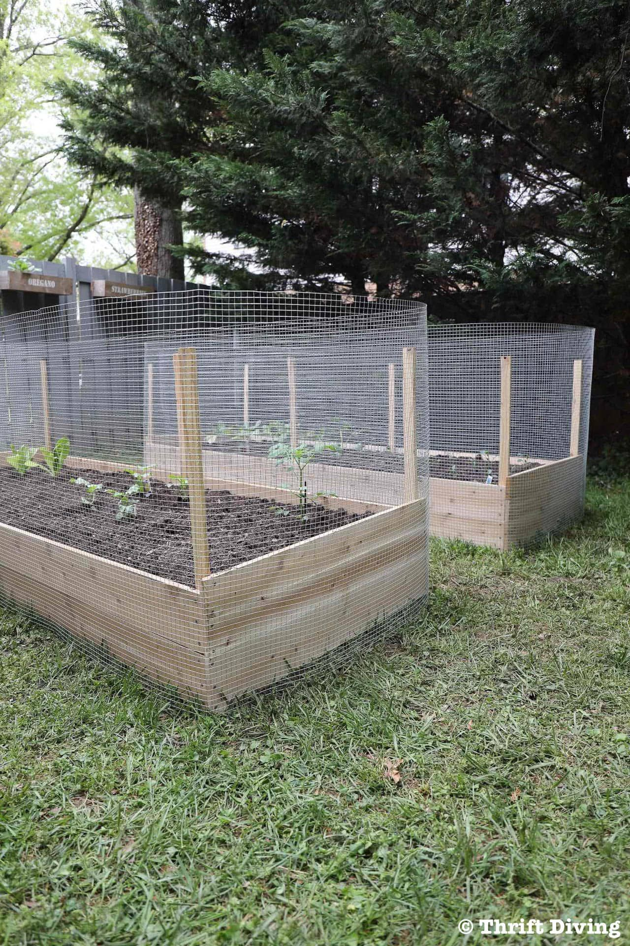 How To Build A Diy Raised Garden Bed And Protect It With A Metal