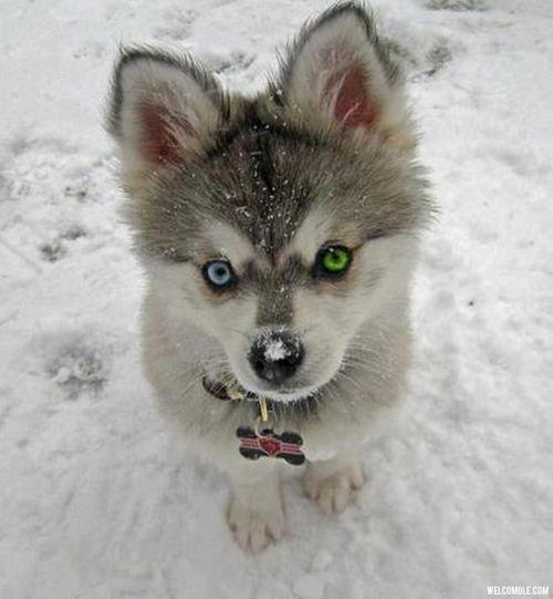 Blue Eyes Green Eyes Cute Baby Animals Cute Animals Animals
