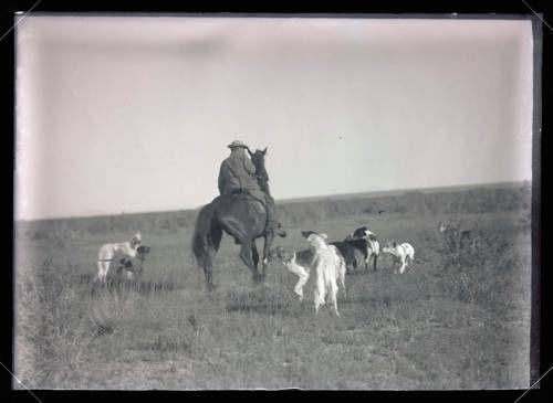 Borzoi Hunting Coyote 1908 Pt.2 -Oregon Historical Society ...