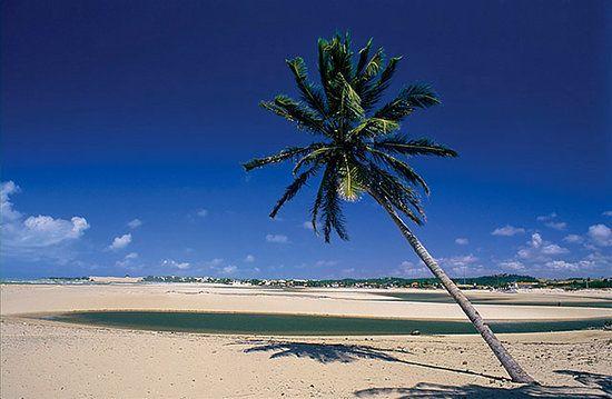 Praia de Genipabu Natal, Brasil