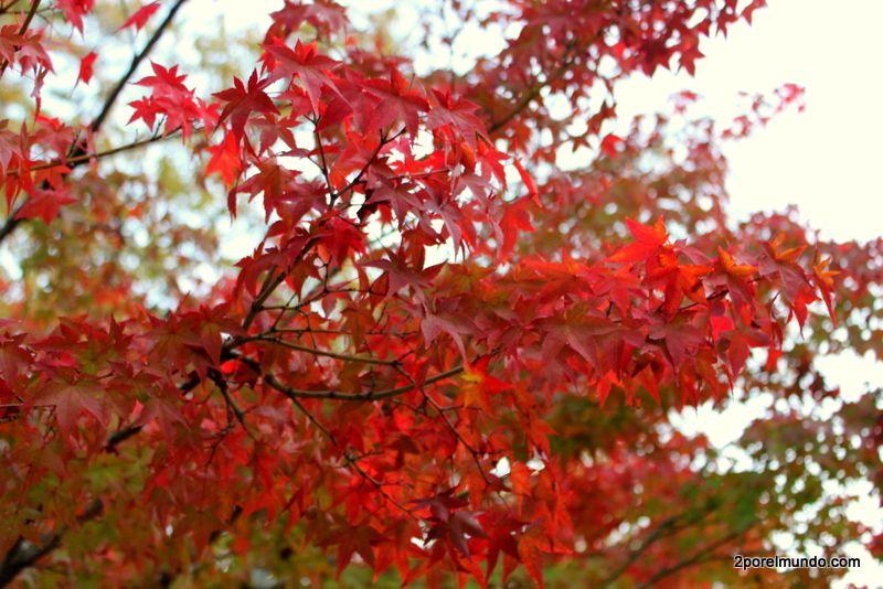 Resultado de imagen de El otoño y toda su belleza.