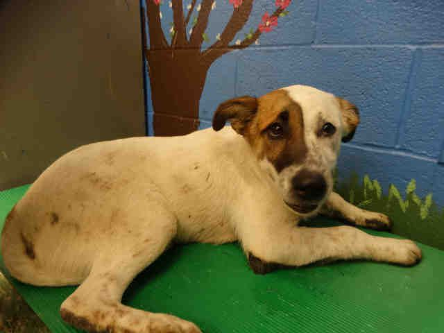 Petharbor Com Animal Shelter Adopt A Pet Dogs Cats Puppies Kittens Humane Society Spca Lost Found Animal Shelter Animals Humane Society