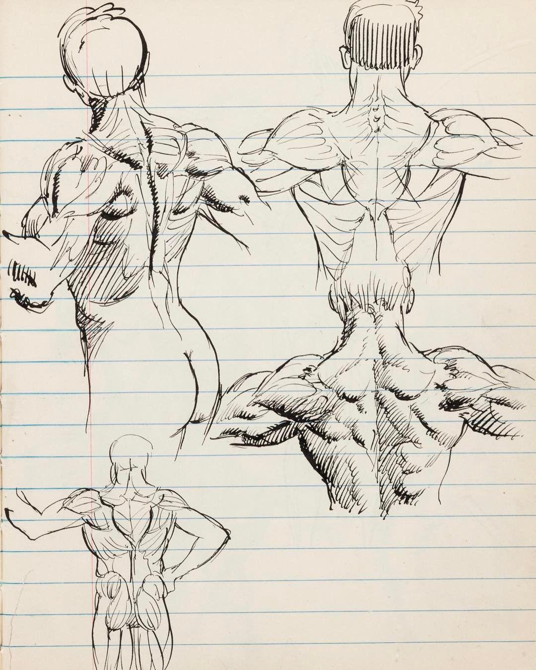 Anatomy\