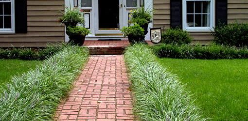 How And When To Trim A Monkey Grass Border Monkey Grass
