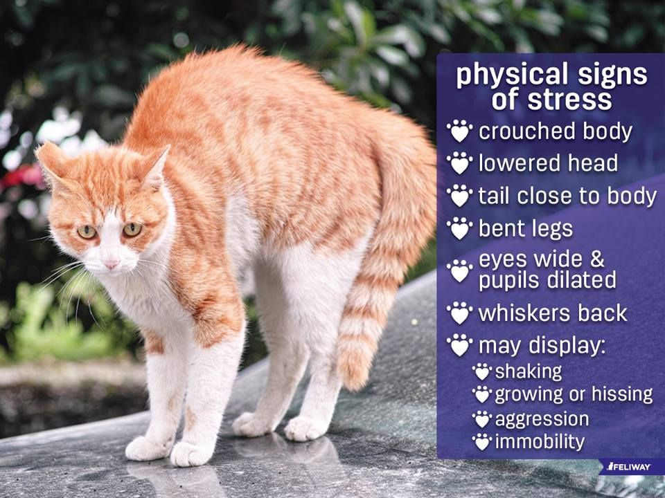 Knowing the signs of stress in your cat is the first step