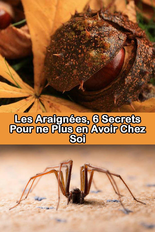 Faire Fuir Les Fourmis les araignées, 6 secrets pour ne plus en avoir chez soi
