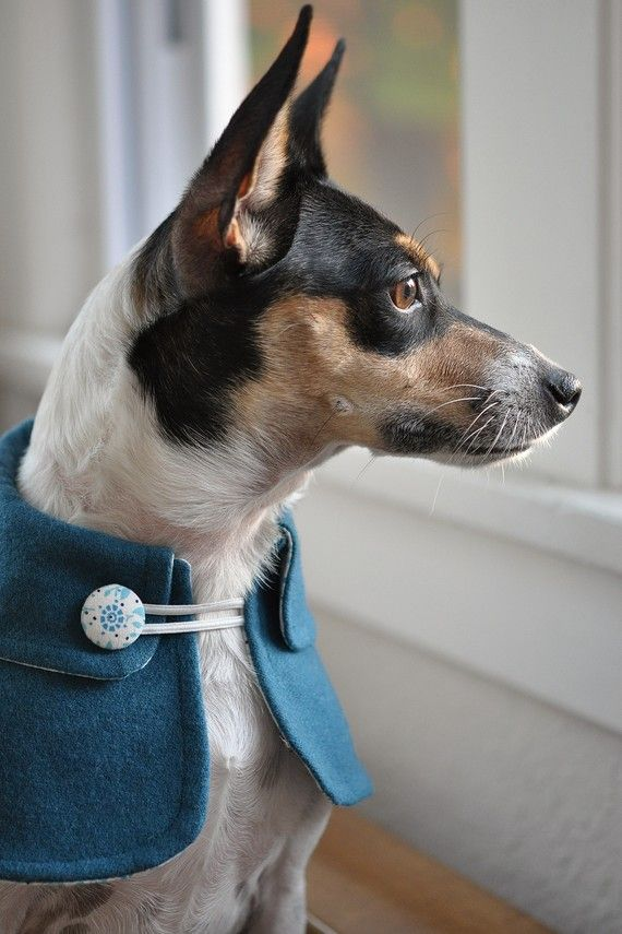 A Dapper Dog In A Blue Wool Cape By Bugduds On Etsy Blue Wool