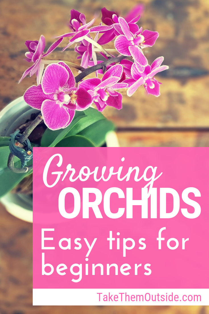 12 planting Flowers orchid care ideas