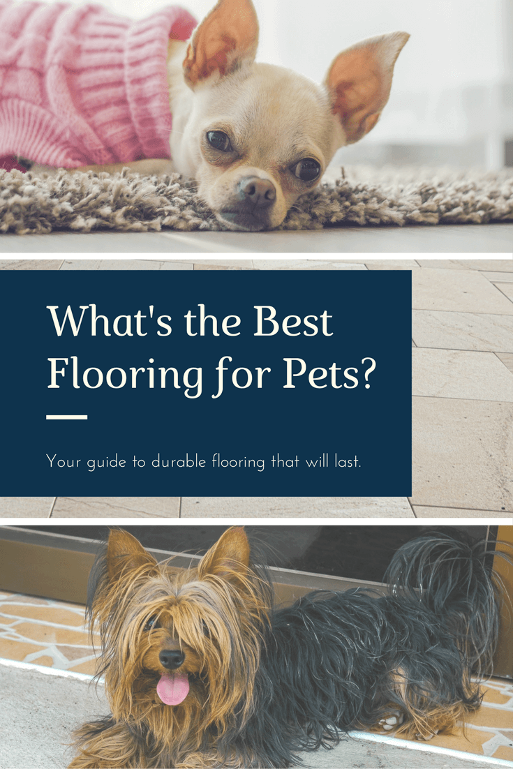 Tile or Stone Flooring for Pets? North American ChemDry