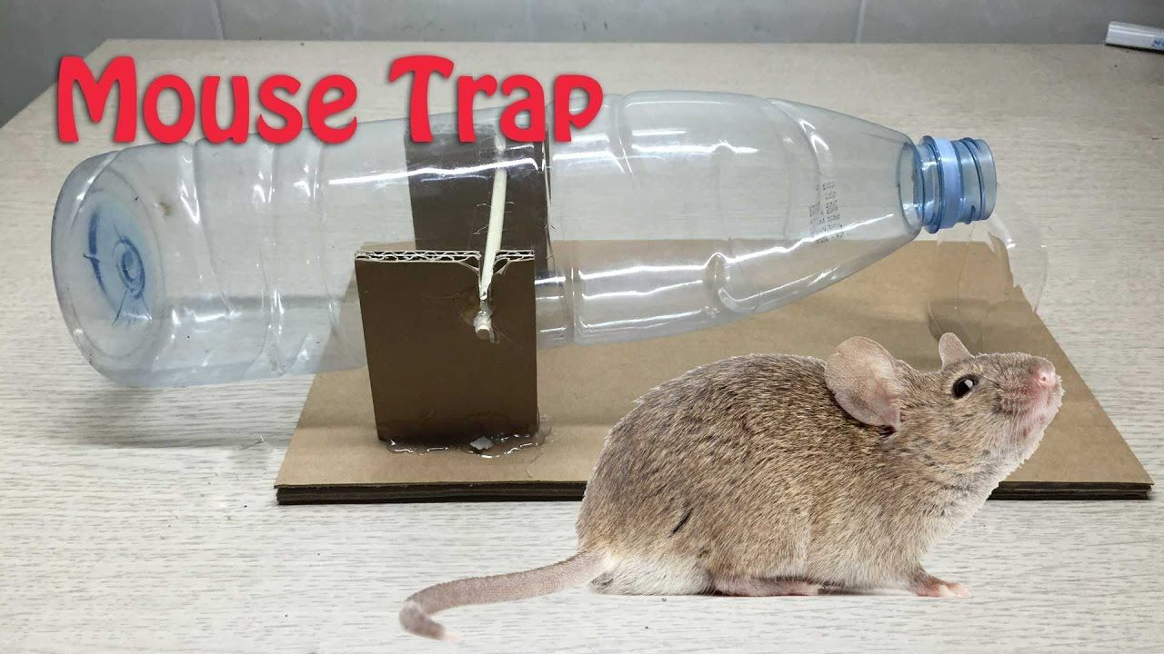 how to make mouse trap from plastic bottle pop bottle mouse traps