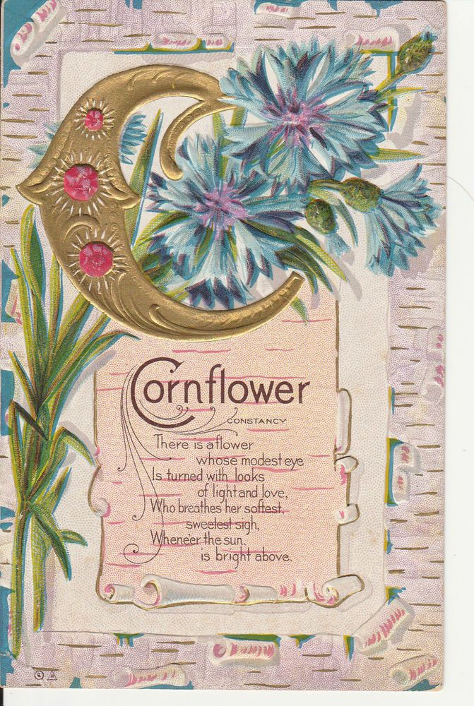 Letter C Cornflower Alphabet Greeting Constancy Flower Jewels Embossed Postcard Flower Alphabet Print Collage Vintage Flowers