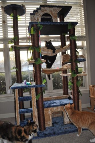 Kitty Mansions Huge Cat Tree Condo House Amazon Jungle Gym Beige