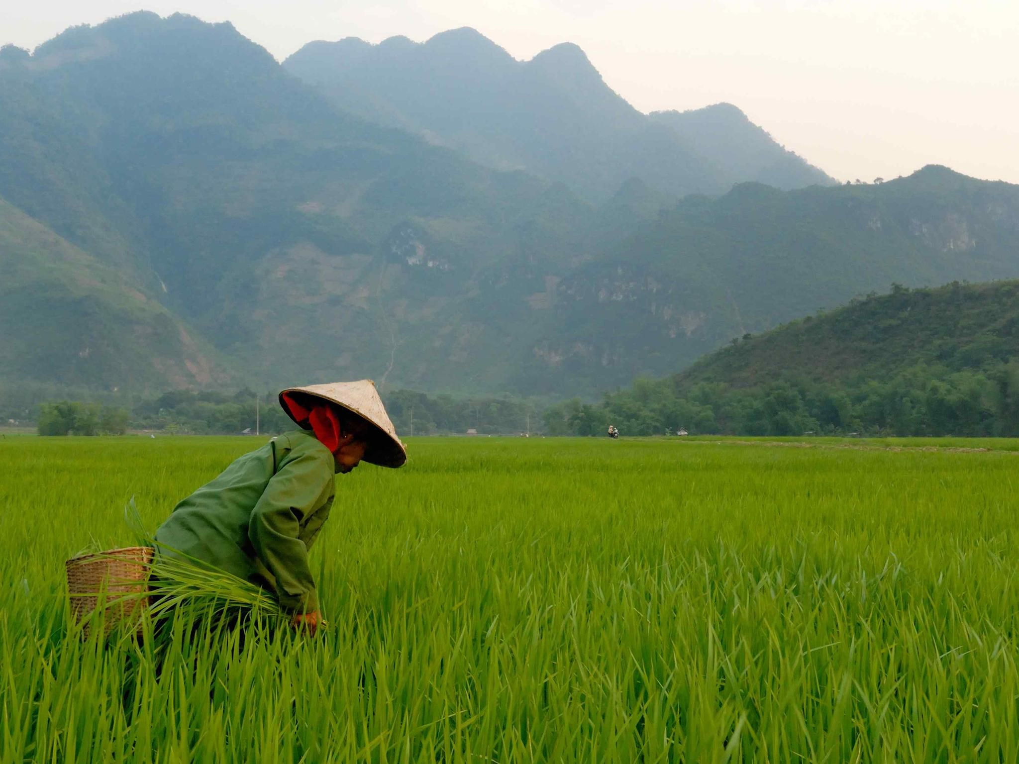 There Are Now Only 10 Countries In The Whole World That Are Fully At Peace Vietnam Travel Guide Vietnam Travel Visit Vietnam