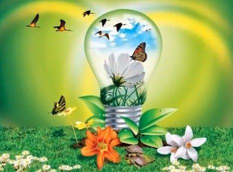 Proyecto Para Salvar El Medio Ambiente Environment Photo
