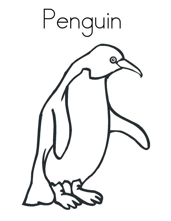 A Realistic Drawing Of Humboldt Penguin Coloring Page Penguin Coloring Pages Penguin Coloring Realistic Drawings
