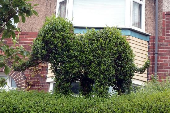 You need to trim your hedges anyway... why not get creative? ;)