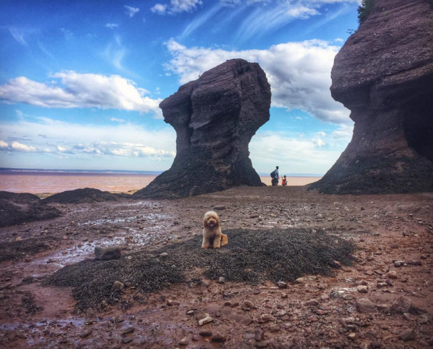 "If you have time, zip on over to the New Brunswick side of the Bay of Fundy to check out the amazing ""flower pot"" rock structures. 