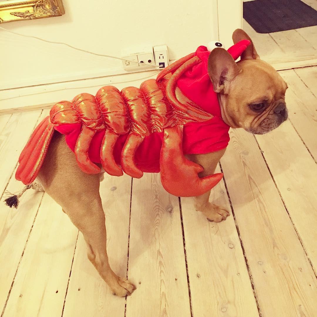Diy Lobster Crab Costume Crab Costume Lobster Costume