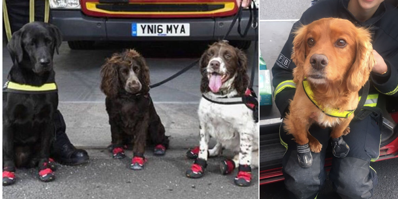 The hero dogs who helped during the Grenfell Tower rescue