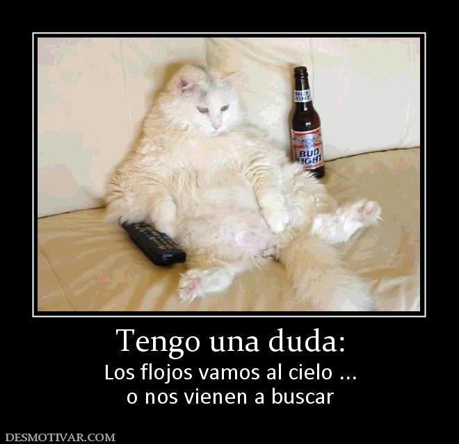 Desmotivar Com Cat Memes Funny Animal Pictures Funny Animals
