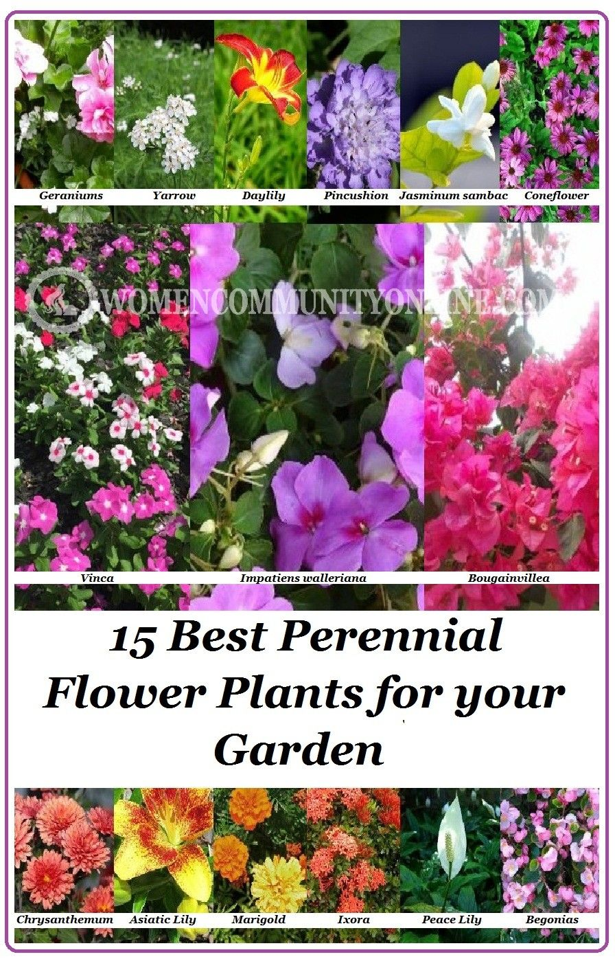 15 Best Perennial Flower Plants for your Garden is part of Perennial garden Layout - Today I'm listing here 15 best perennial flower plants that you can have for your garden  Perennials are those flowering plants