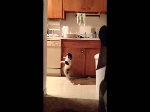 Dog Dancing Gloria Estefan S Song Dogs Funny Prank Videos