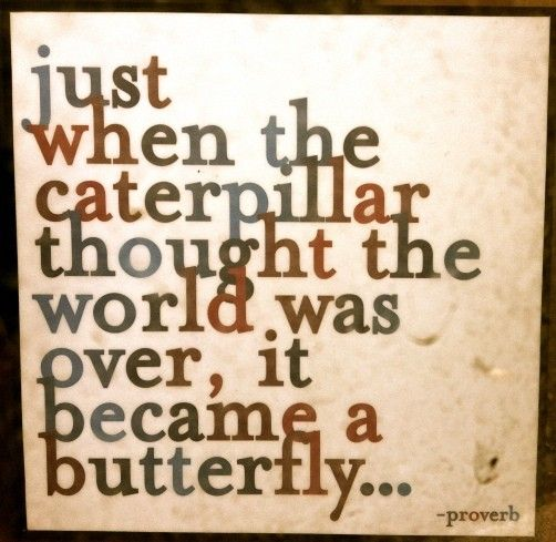 just when the caterpillar thought the world was over...