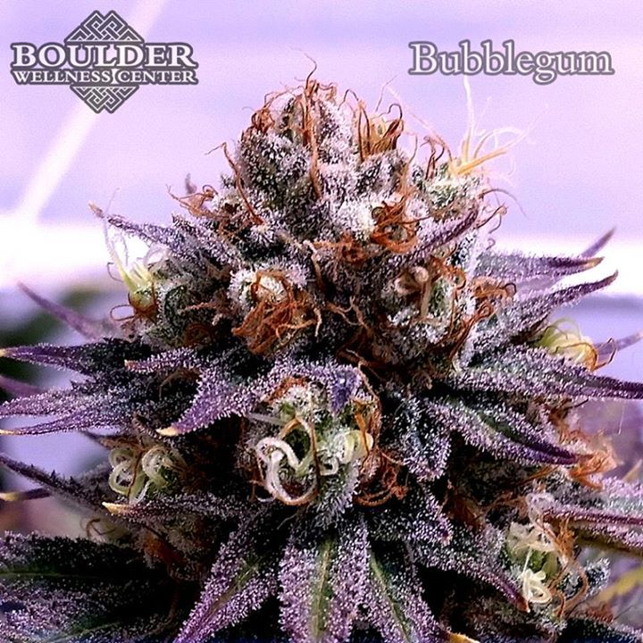 THSeeds' strain Bubblegum - grown in our proprietary living