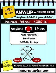 Amylase lipase pancreatitis enzymes endocrine coagulation labs amylase lipase pancreatitis enzymes endocrine coagulation labs prothrombin inr cardiac enzymes fishbone cheat sheet mnemonic nursing ccuart Images