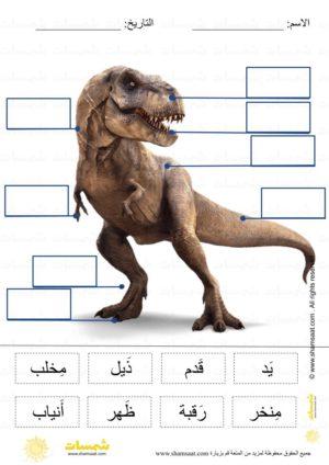 قراءة و وضع المسميات على الرسم أجزاء جسم ديناصور فوتوغرافي قراءة كلمات علوم للصغار English