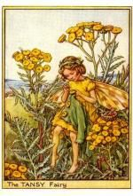 Tansy Flower Fairy Vintage Print by Cicely Mary Barker